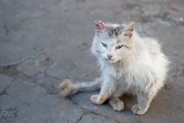 Feral, Stray and Pet Cat Management